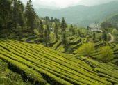 GLOSA: »Ekologie, efektivita a inovace«
