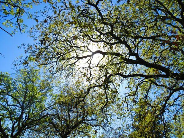 GLS spolupracuje s Pumou na výsadbě stromů
