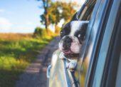 GLOSA: »Clo na auta jako součást konkurenčního boje«