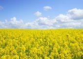 GLOSA: »Potraviny, půda a logistické parky«