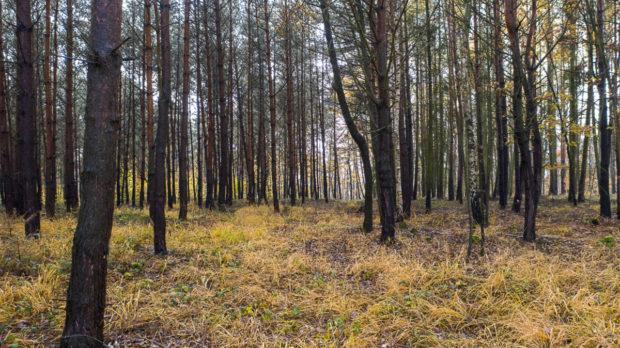 CTP připravuje revitalizaci lesa u Mladé Boleslavi