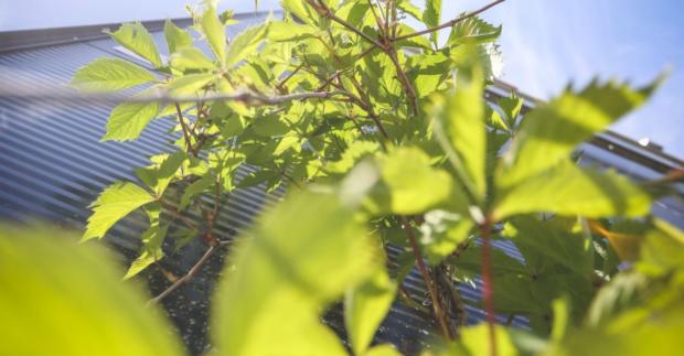 Zahradní architektura patří i do průmyslových parků